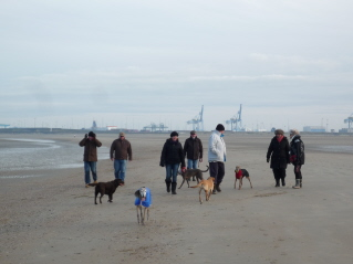 Dog walking at Zeebrugge