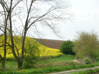 Fields near Cambrai