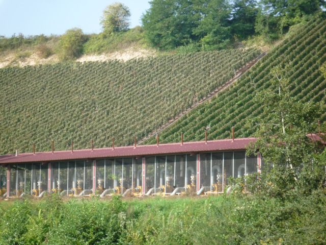 Vineyards with irrigation system